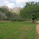 Excursión al mirador de Ses Sínies por Finca de Galatzó