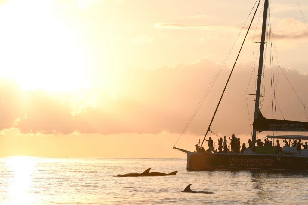 delfines mallorca